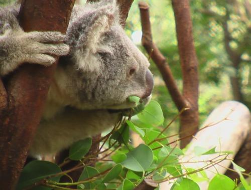 Koala1blog_1