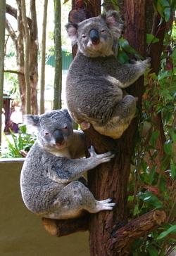 Koala2blog